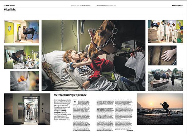 FOTO https://2021.bfknt.nl/20210507-de-volkskrant-paard-docteur-peyo.jpg