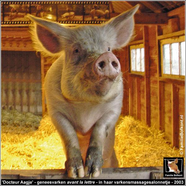'Docteur Aagje' - geneesvarken avant la lettre - in haar varkensmassagesalonnetje - 2003