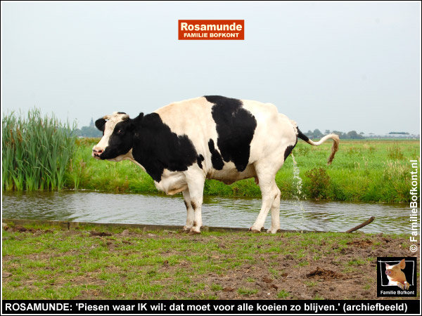ROSAMUNDE: 'Piesen waar IK wil: dat moet voor alle koeien zo blijven.' (archiefbeeld)